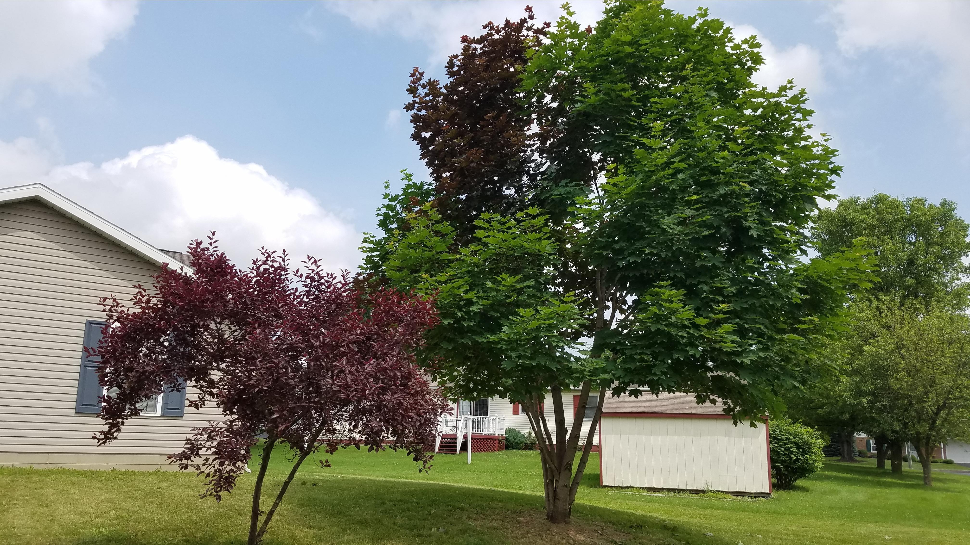 No Sweat Lawns & Trees, LLC image 0