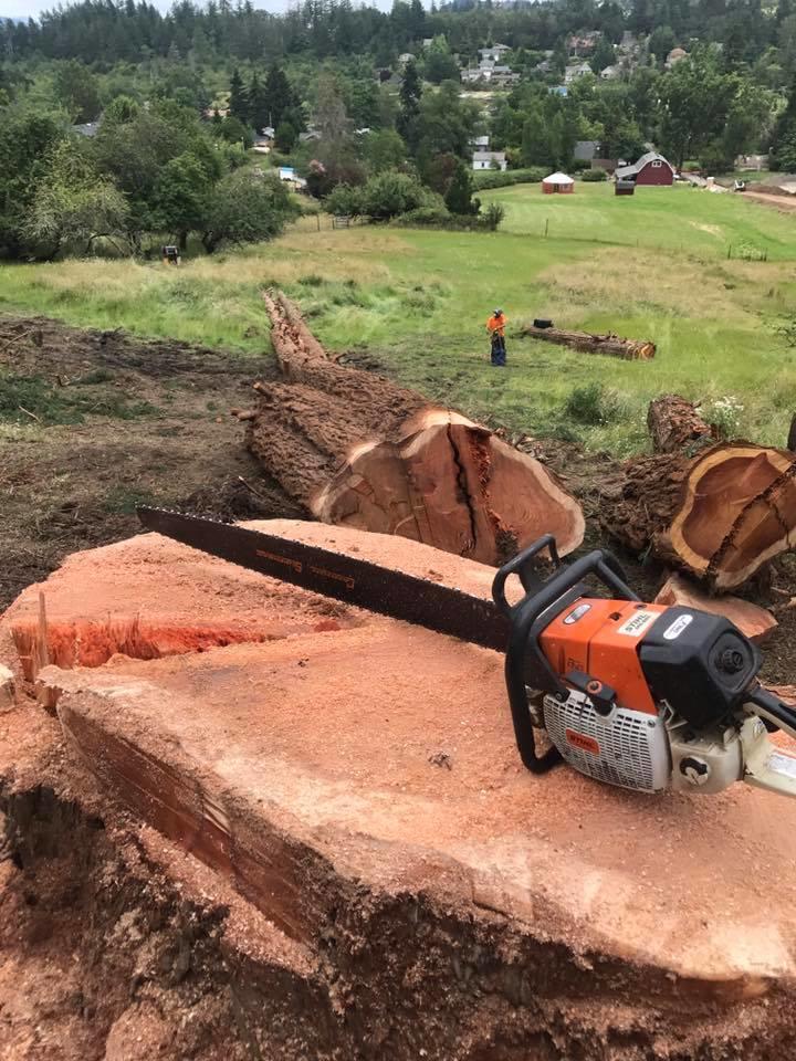 Rose Tree Service & Vegetation Management, LLC image 0