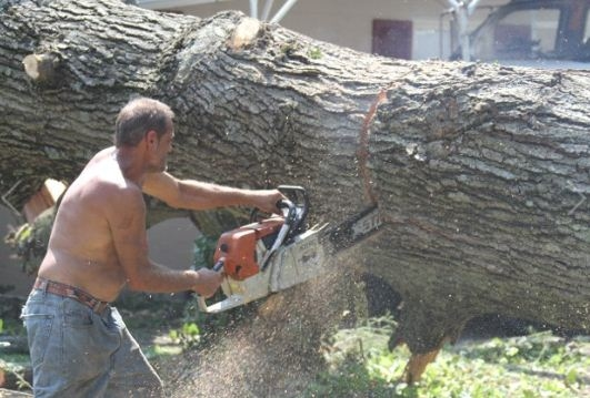Sprouse's Tree Service LLC image 6