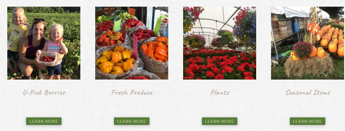 Candella's Farm & Greenhouses image 0