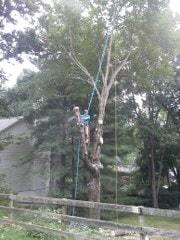 Holcomb Tree Experts image 2