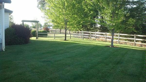 KJ Lawn Maintenance & Spraying, Inc. image 2
