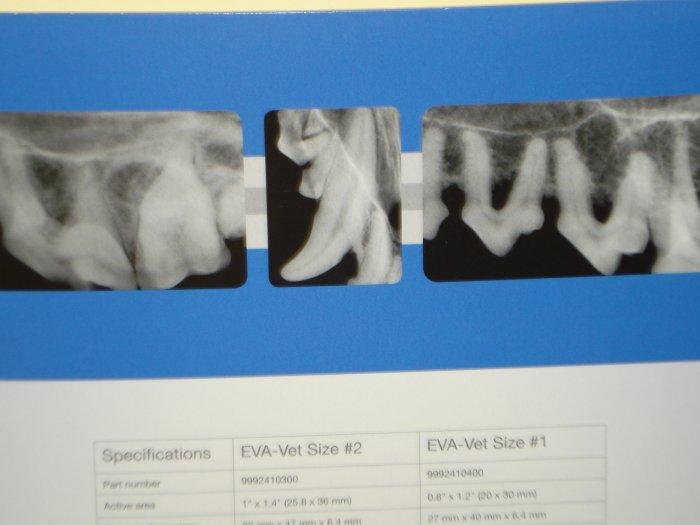 VCA Carrollwood Cat Hospital image 3