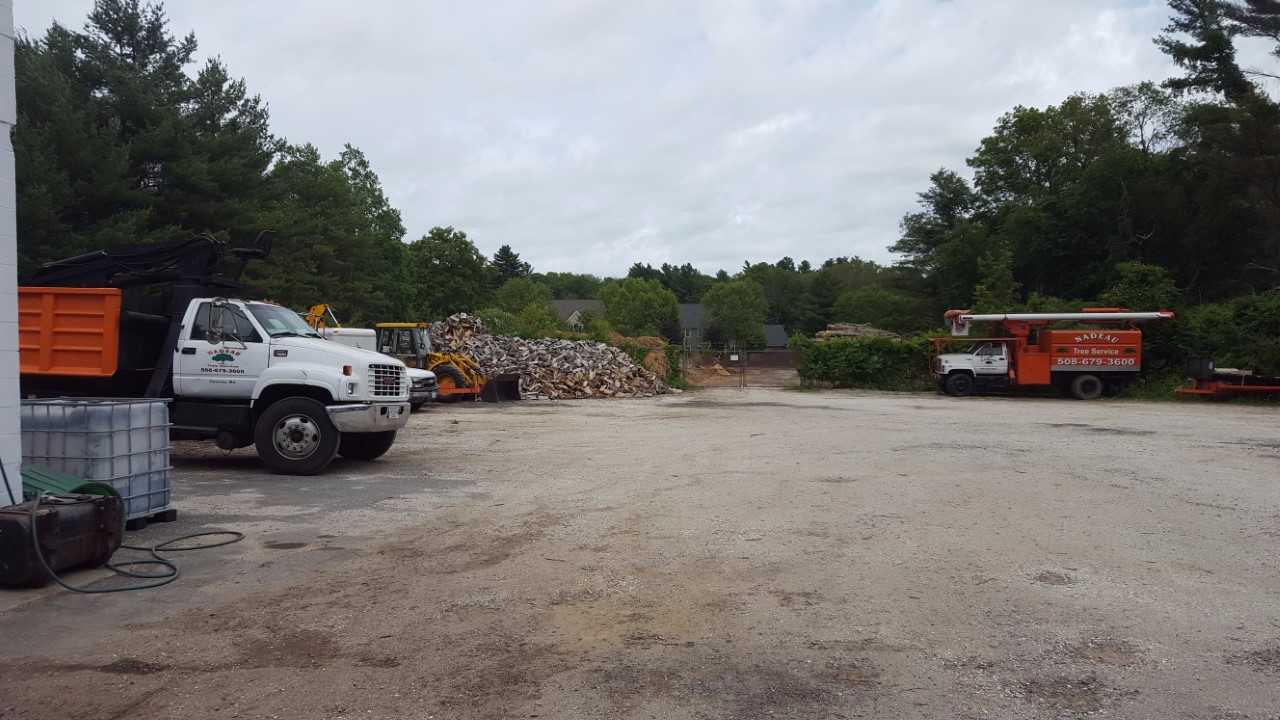 Nadeau Tree Services image 1