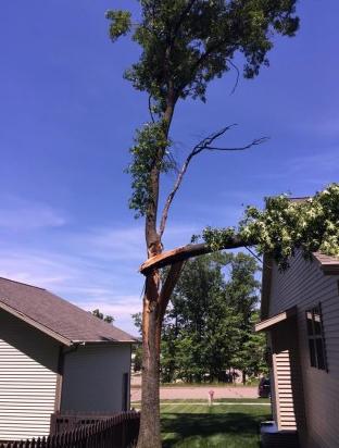 Buresh Tree Service image 1