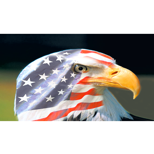 Eagle Painting Company