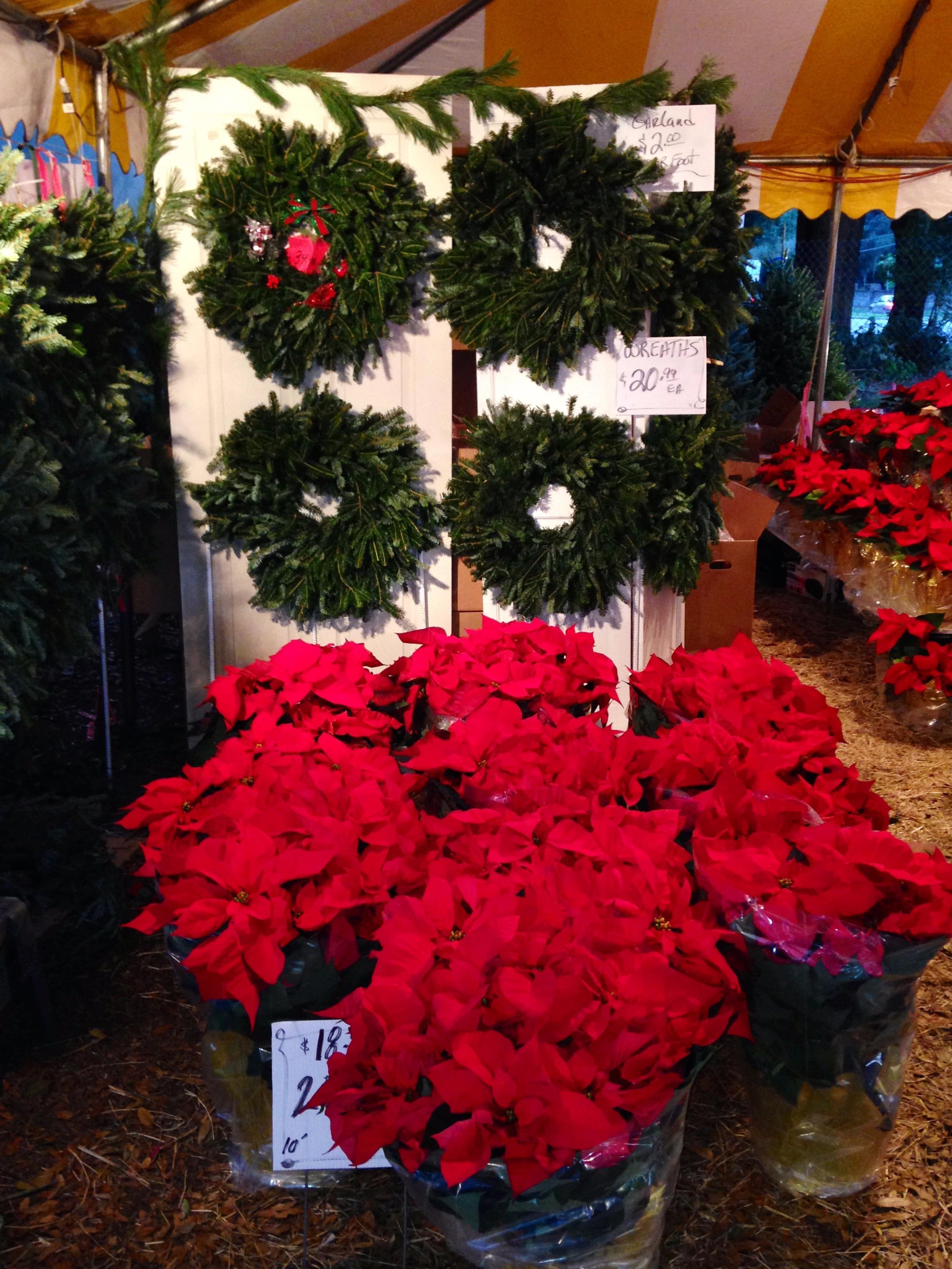 Dave's Christmas Tree Lot image 29