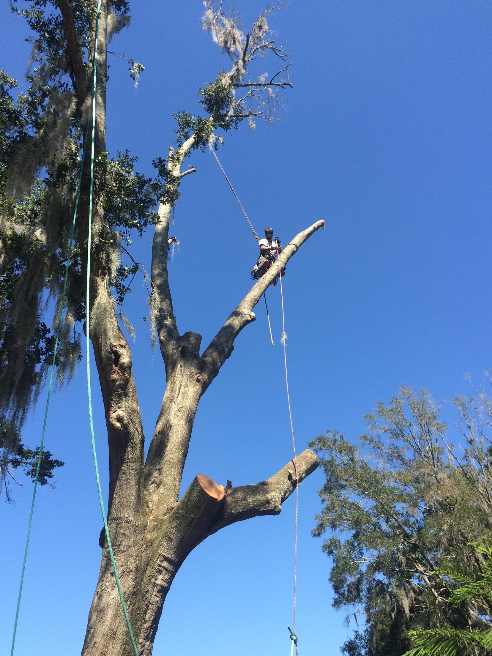 Karney Tree Service image 11