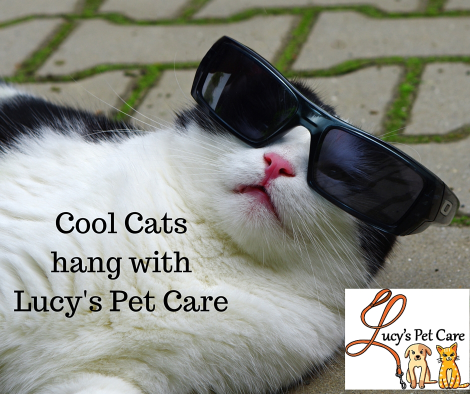 Lucy S Pet Care In Whitepages