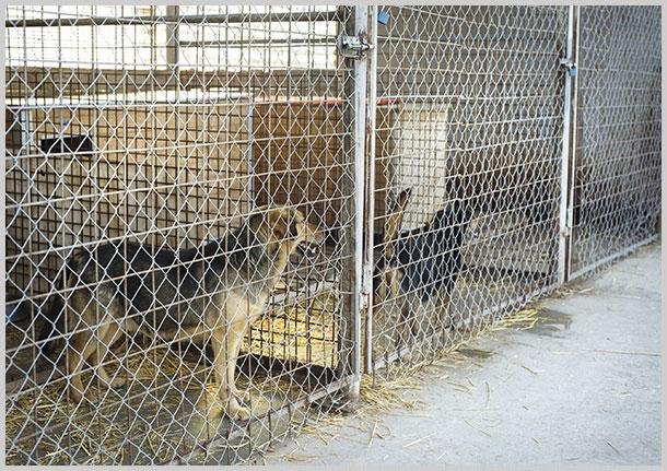 Loubelle's Kennel image 0