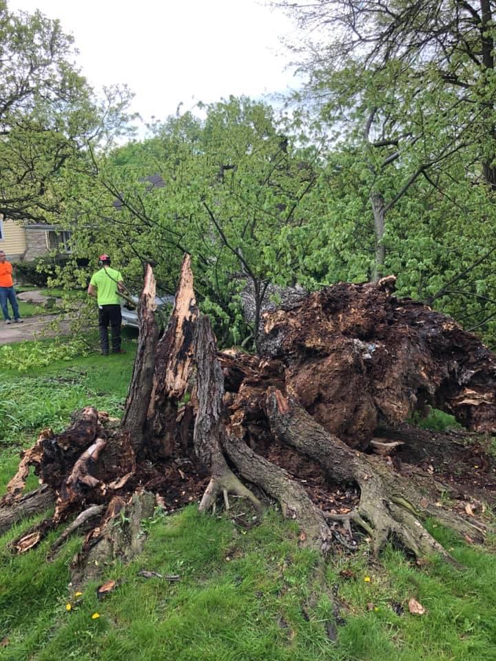 Horhut Tree Experts image 10