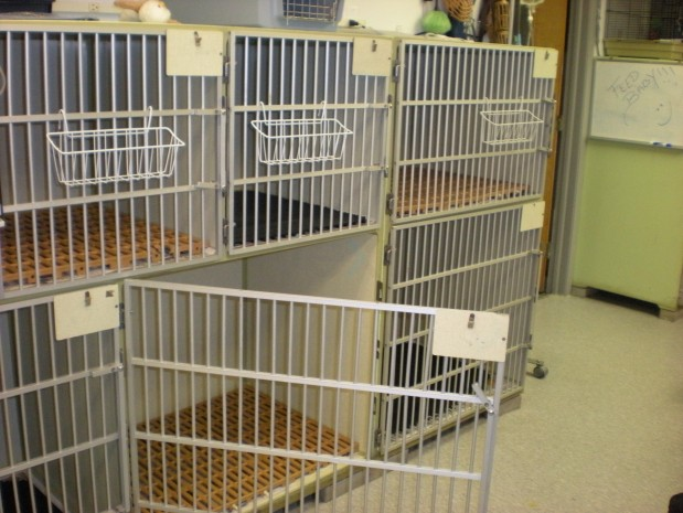 Animal Medical Center image 0