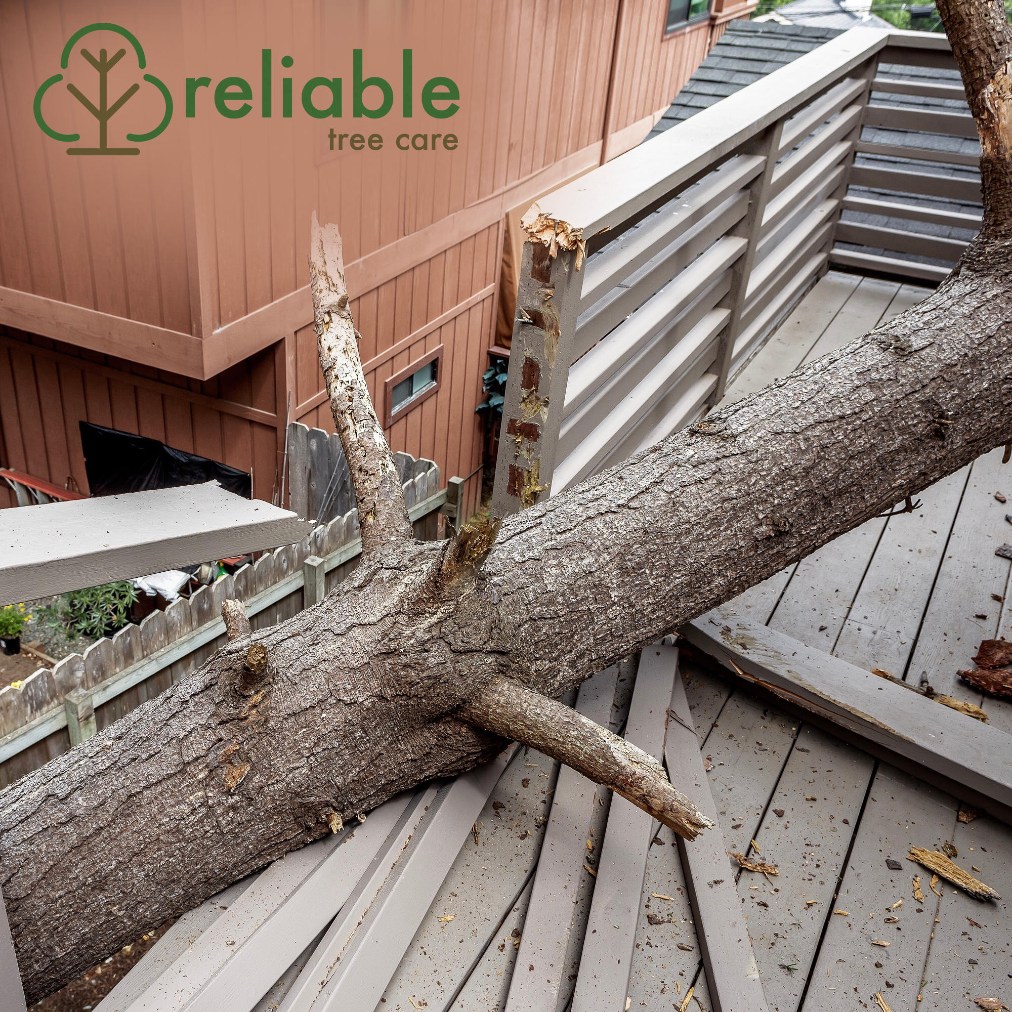 Reliable Tree Care and Removal image 1