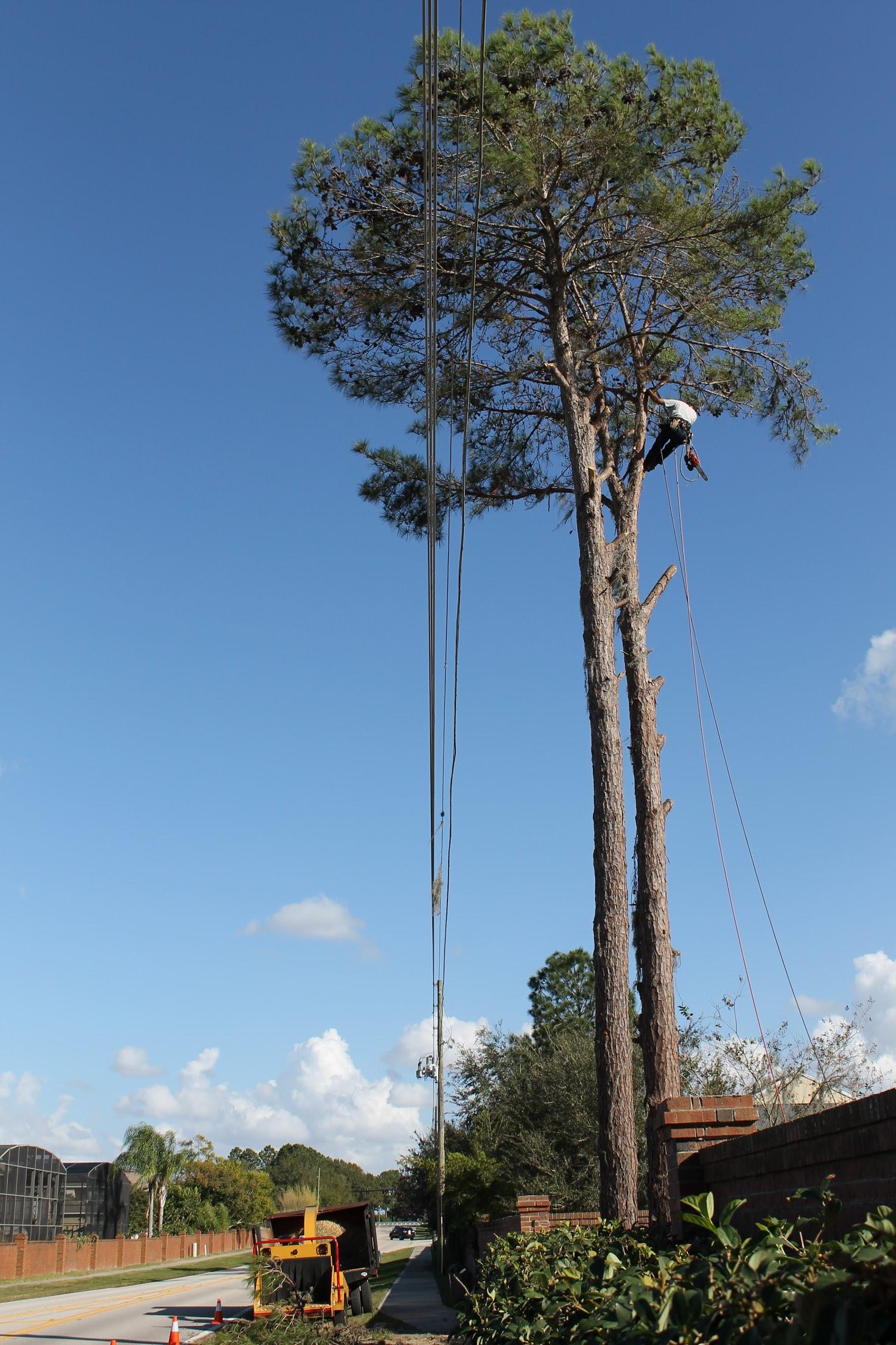 Karney Tree Service image 13