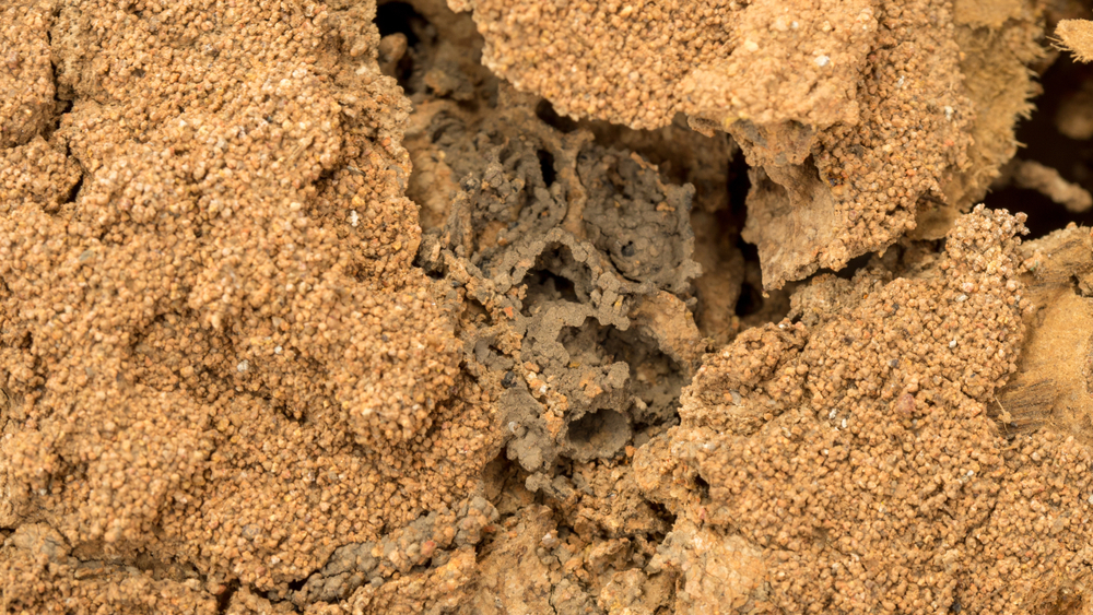 Termites are one of those insects you can't let grow into a problem you can no longer control. Leverett's Pest Control in Auburn is dedicated to providing the best service and being honest about your situation. Don't wait until it's too late and give Leverett's Pest Control a call today to get your termite problem taken care of.