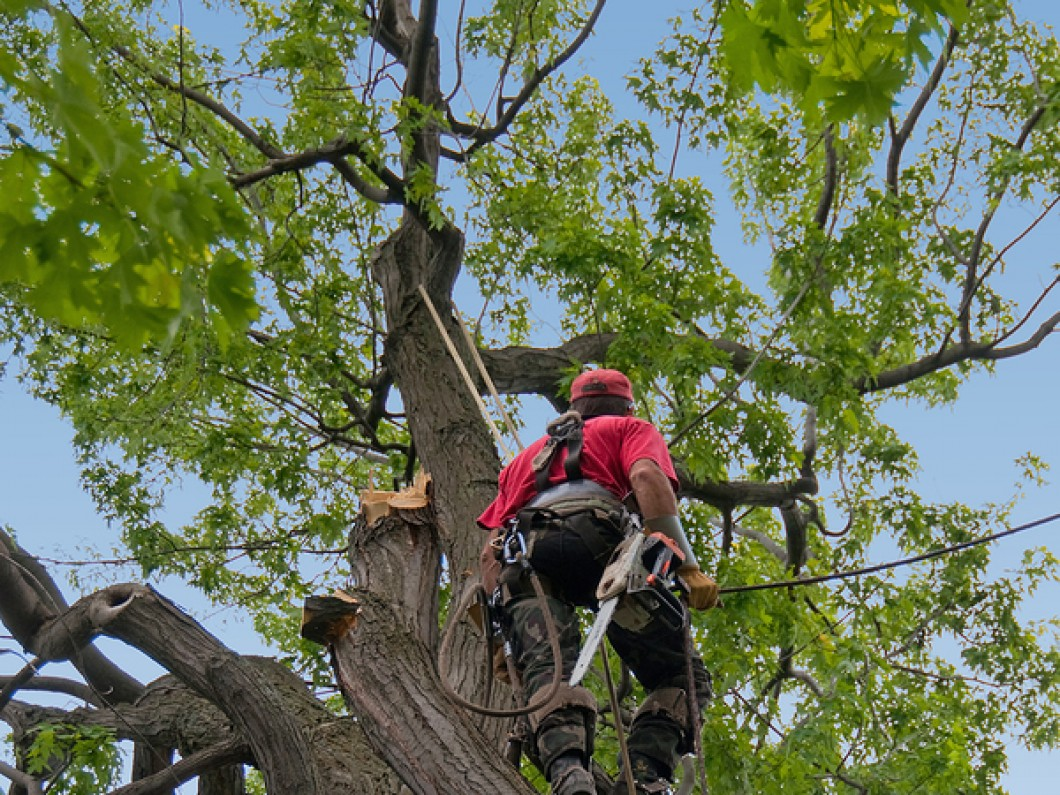 Jennings Tree Services image 3