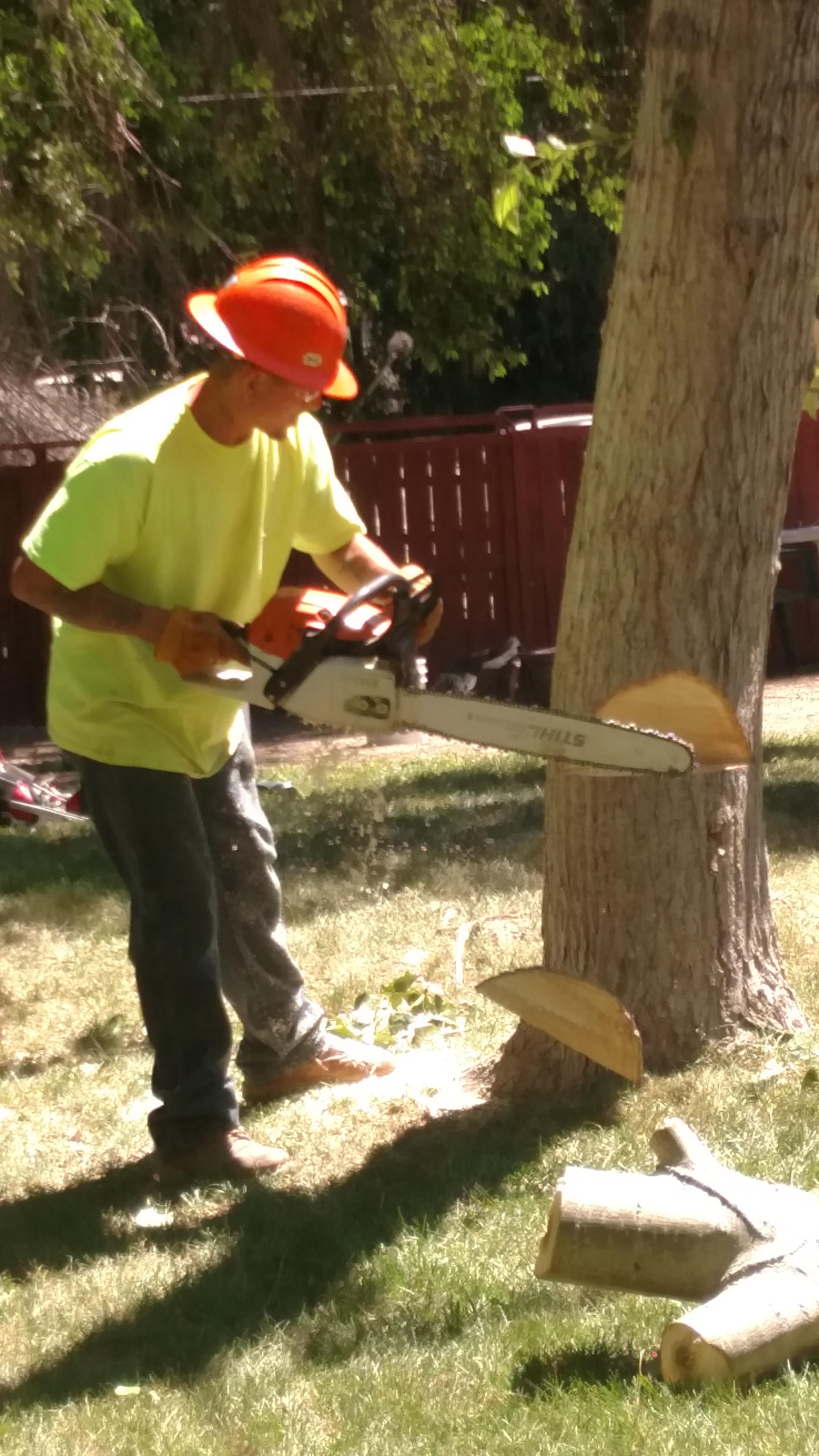 Southern Idaho Tree Specialists image 3