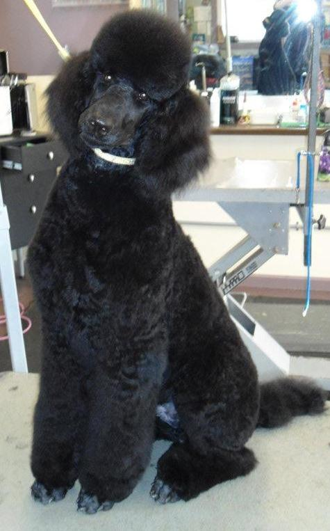 ALL Groomed UP image 4