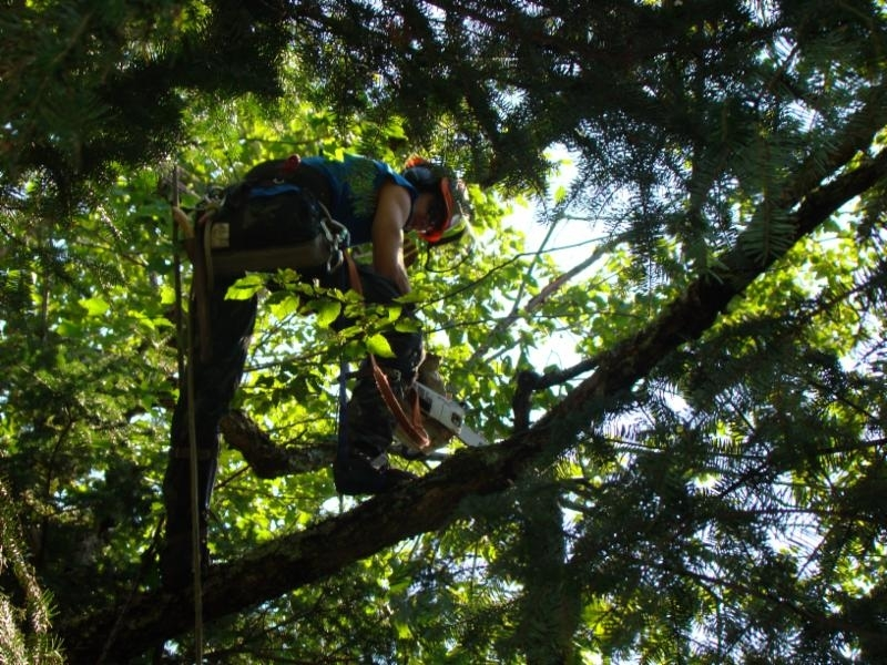 P.L. Experts Tree Service à Gatineau