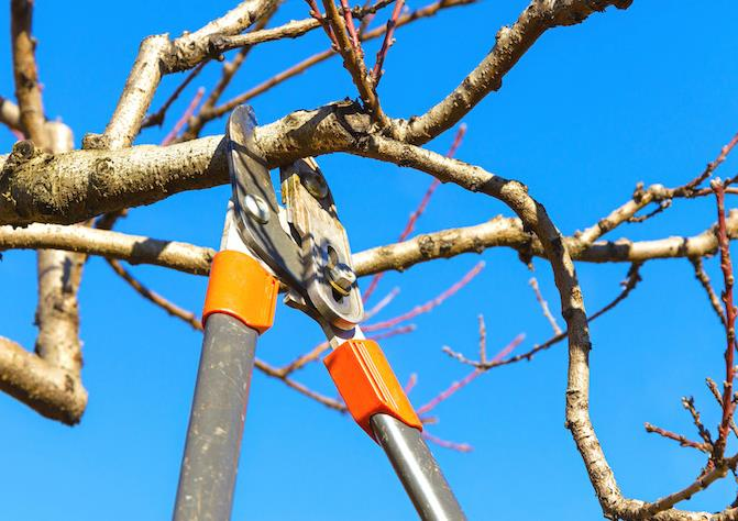 Father And Sons Tree Service image 1