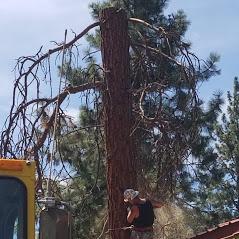 Central Oregon Tree Experts image 13