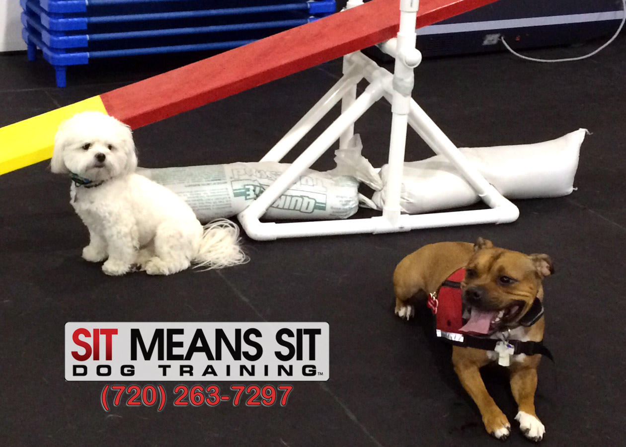Sit Means Sit Longmont-Firestone image 0