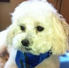 Clip N' Dip Pet Grooming image 0