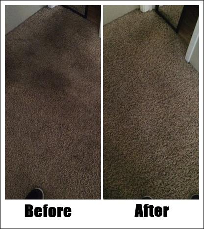 Pristine Carpet Cleaning image 17