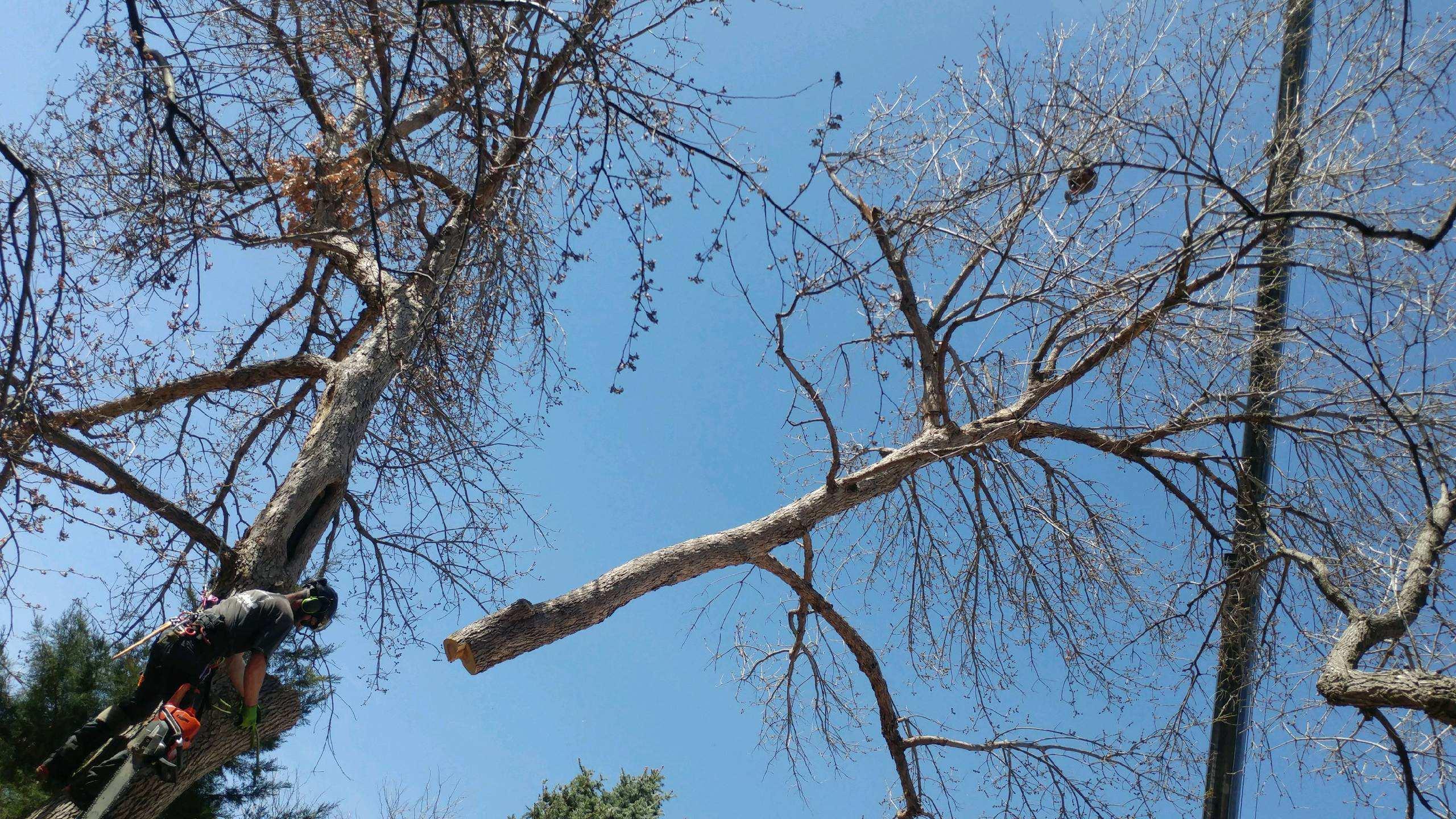 Mortensen Tree Service, Inc. image 6