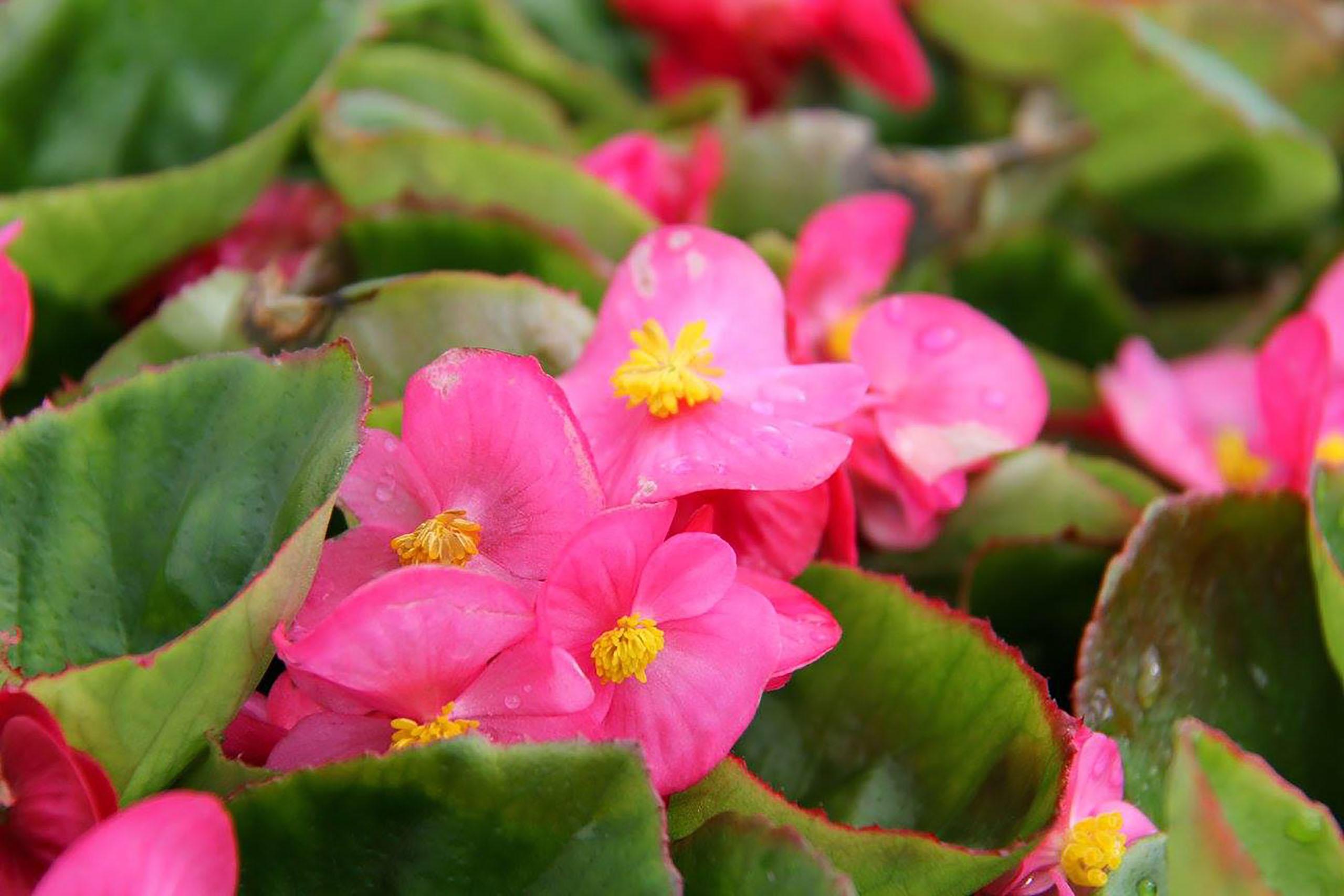 Spring Creek Gardens image 7