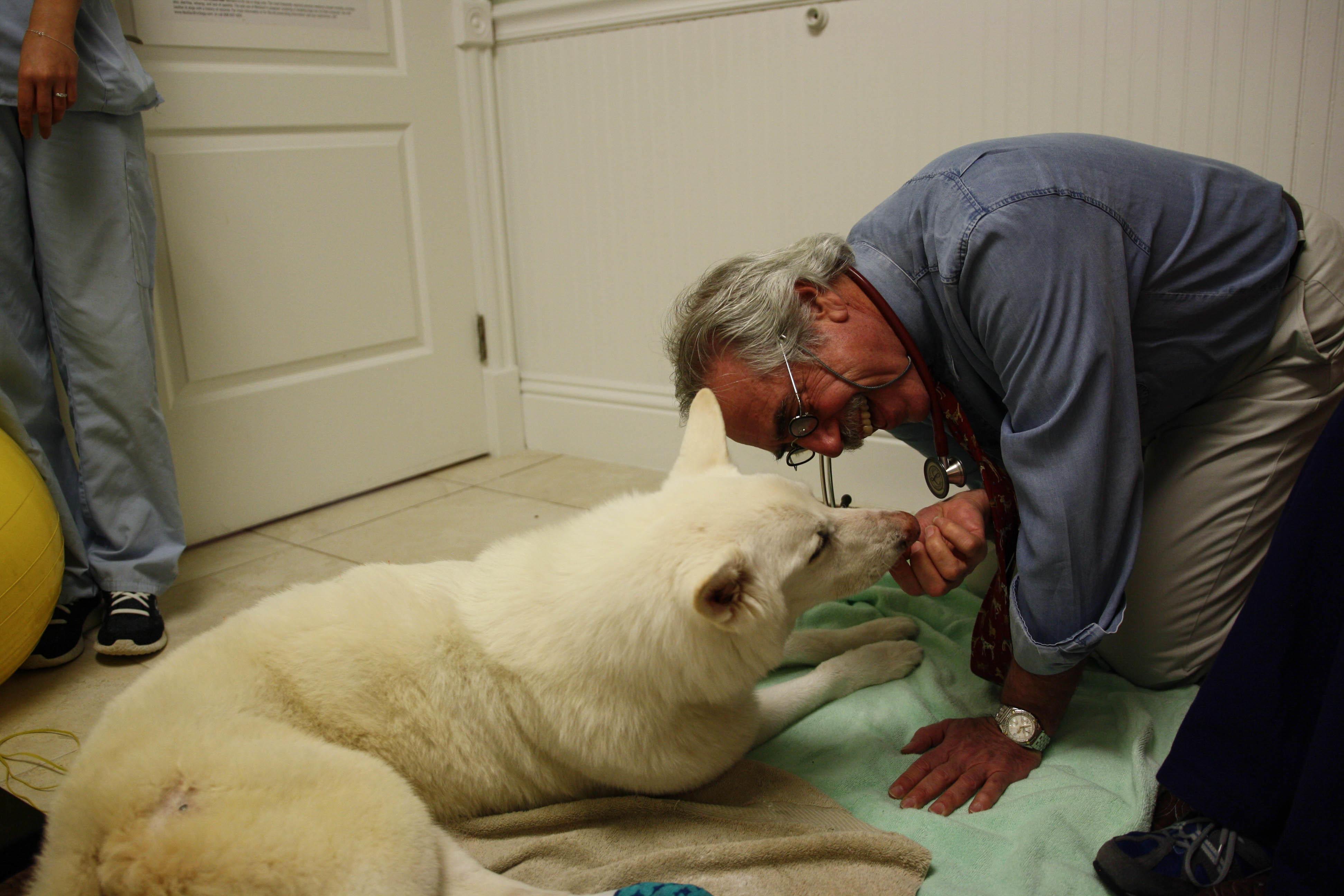 Calusa Veterinary Center in Boca Raton, FL, photo #22
