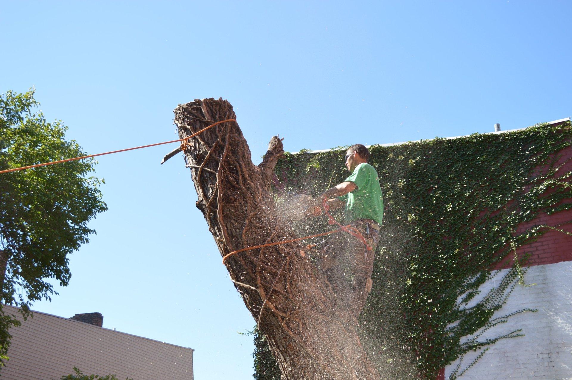 Peru's Tree Service Inc. image 6