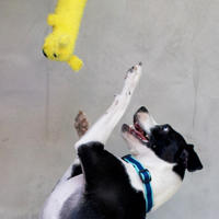Michelson Found Animals Adopt and Shop image 9
