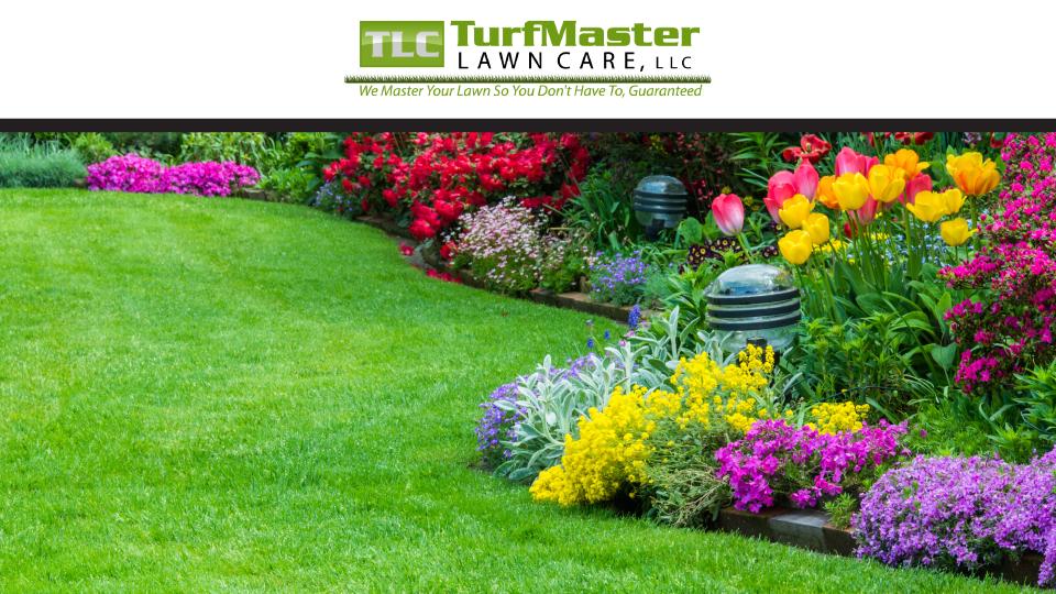 TLC TurfMaster Lawn Care image 0