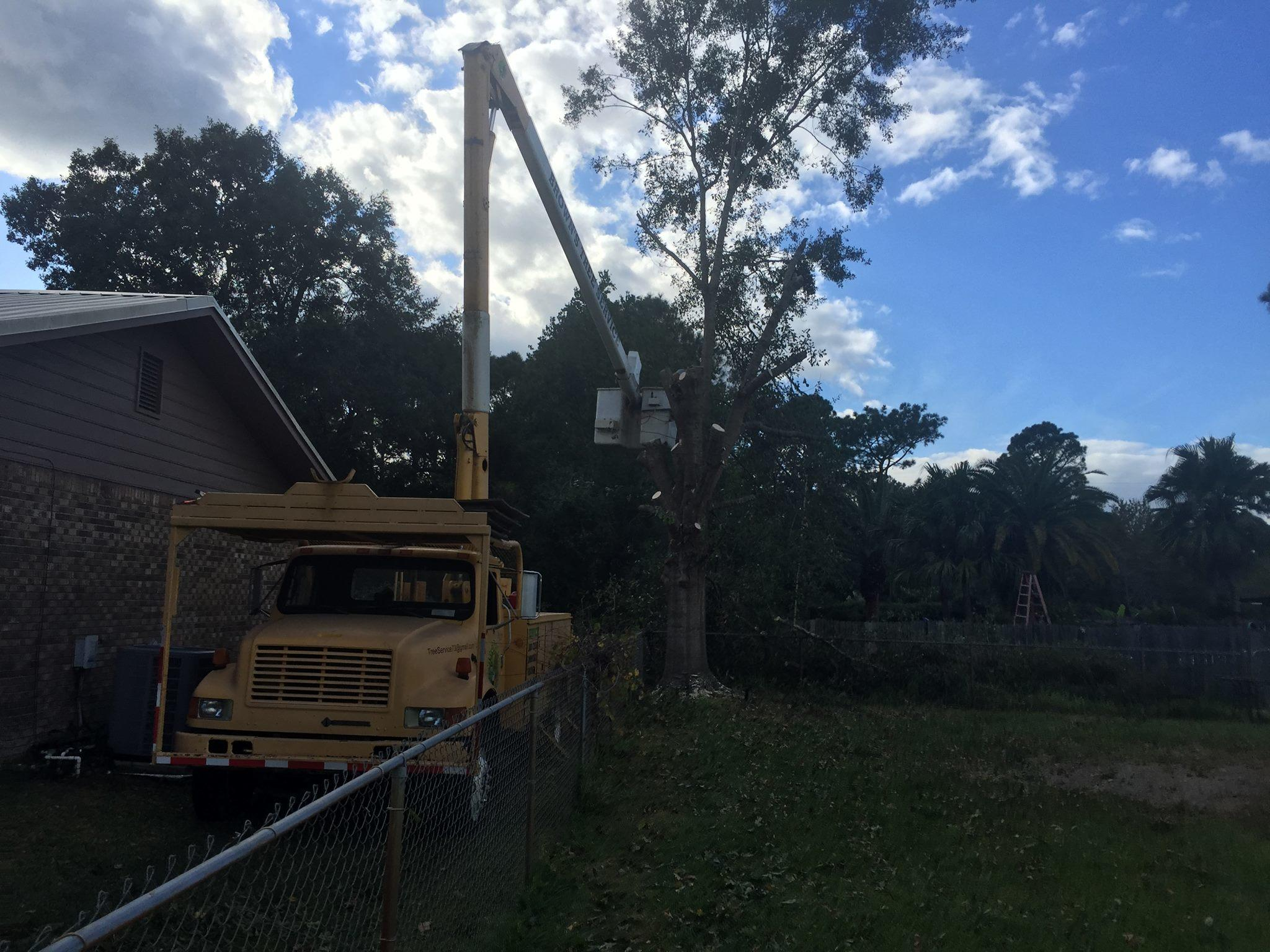 Brown's Tree Service and Land Clearing image 2