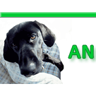 Animal Medicine & Surgery