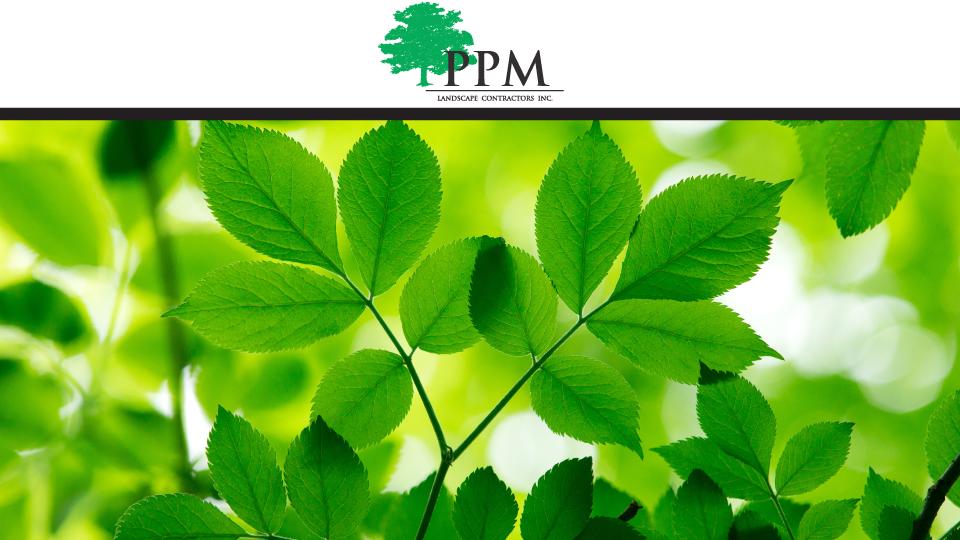 PPM Tree Service & Arbor Care, LLC image 0