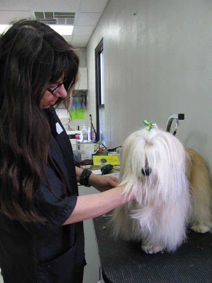 VCA Highlands Animal Hospital image 2