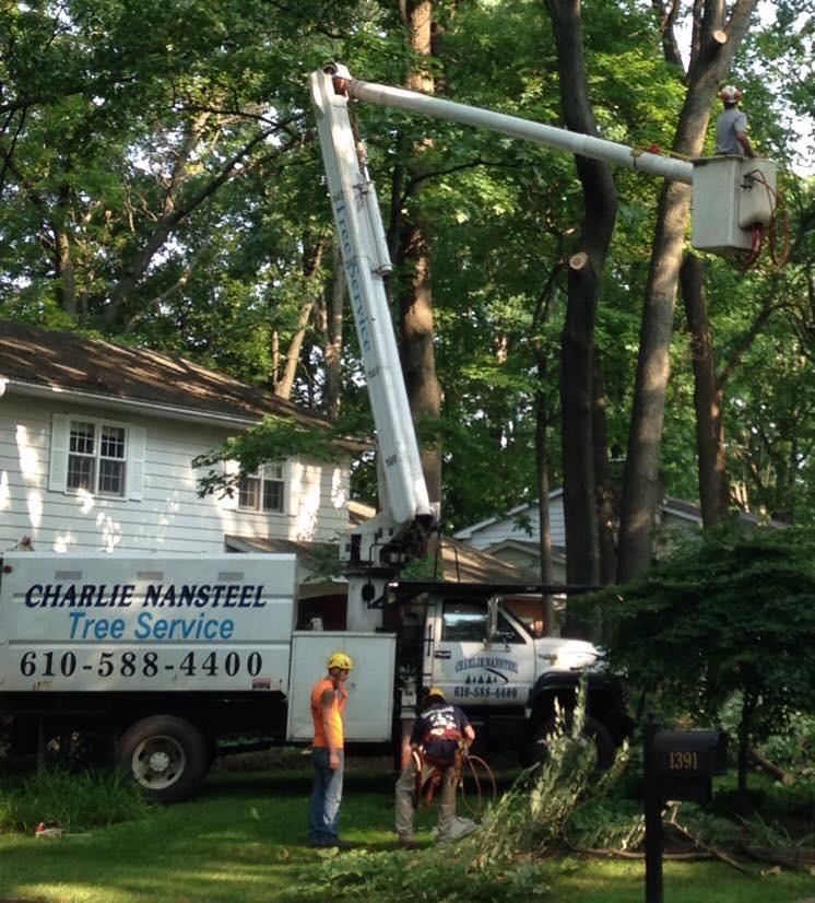 Charlie Nansteel Tree & Excavation, LLC image 3