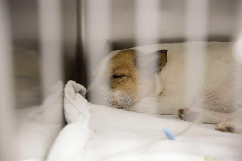 Pima Pet Clinic image 2