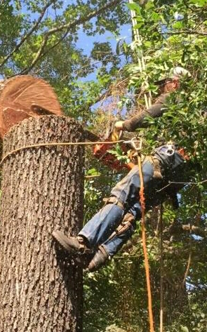 Cole's Tree and Mulching Service image 0