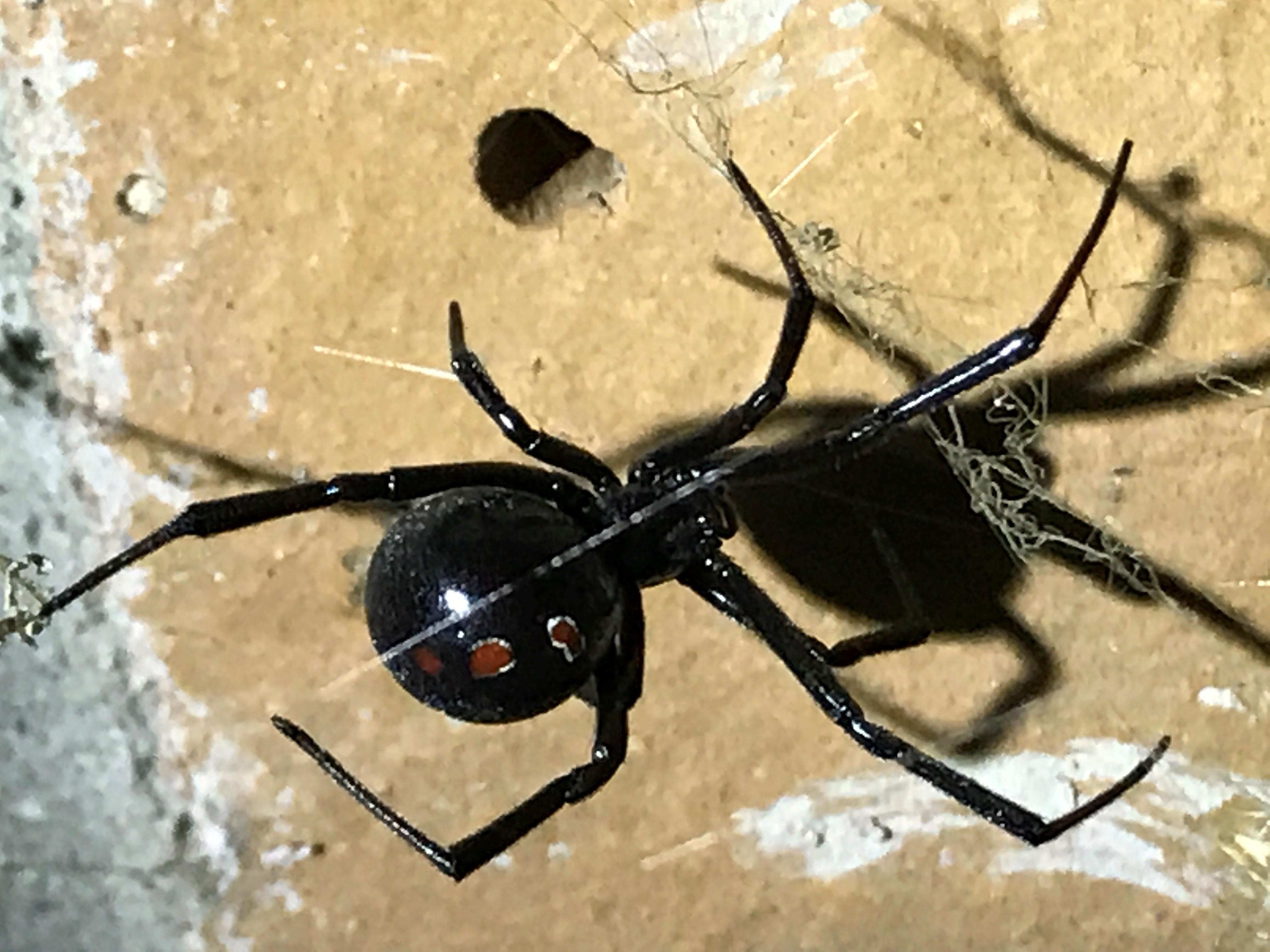NC Pest Control image 8