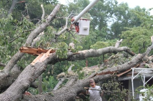 Sprouse's Tree Service LLC image 1