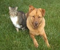 Veterinary Associates image 2