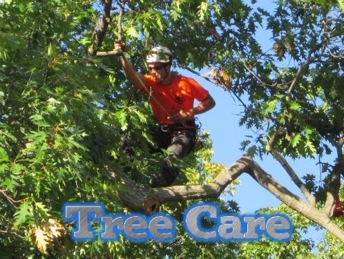 Big Green Tree Service & Landscape image 3
