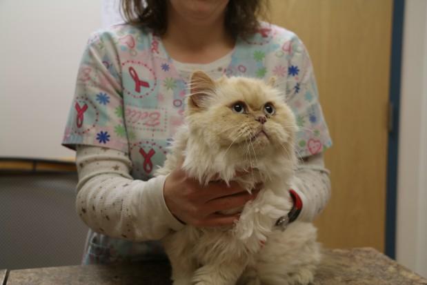 Broadway Veterinary Clinic image 1