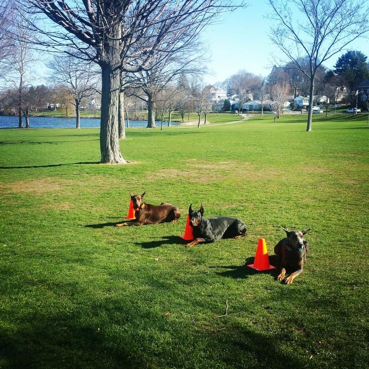 New England Canine image 5