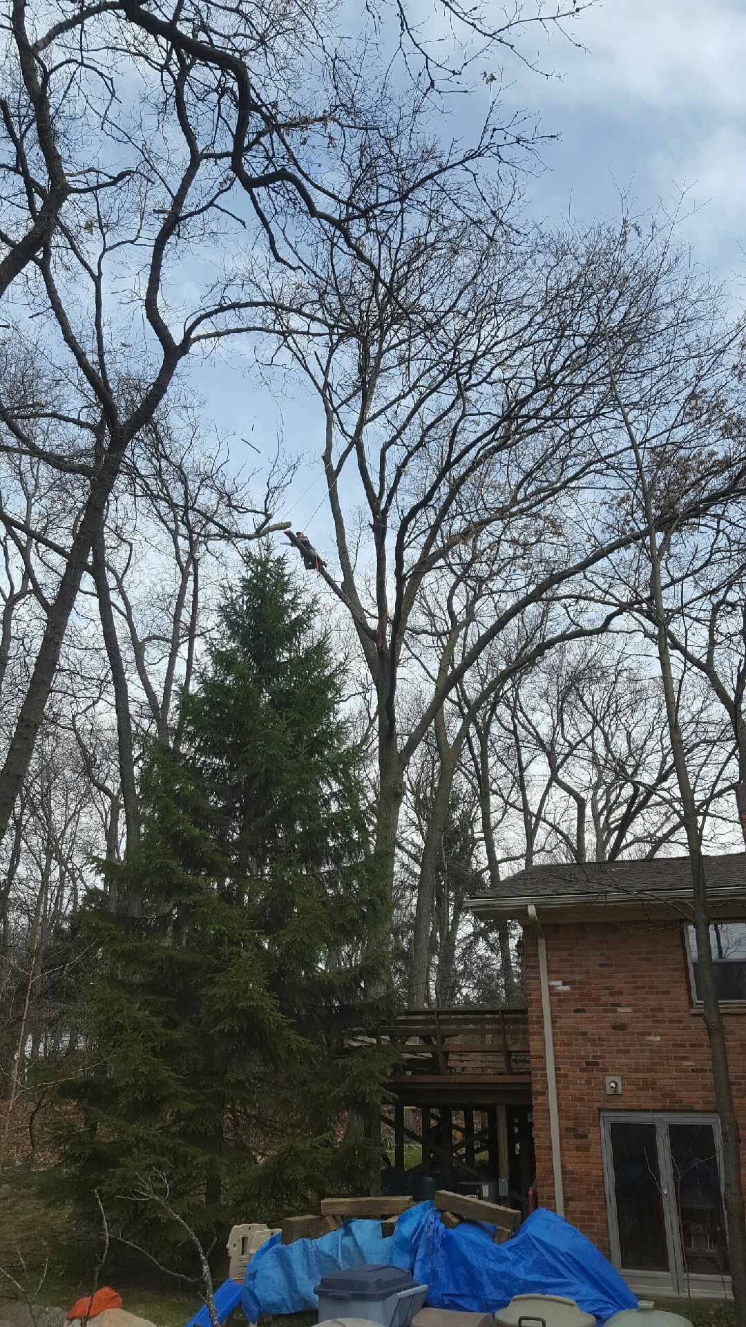 Coffman's Tree Service image 7