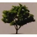 TTS Landscape & Tree Management Services