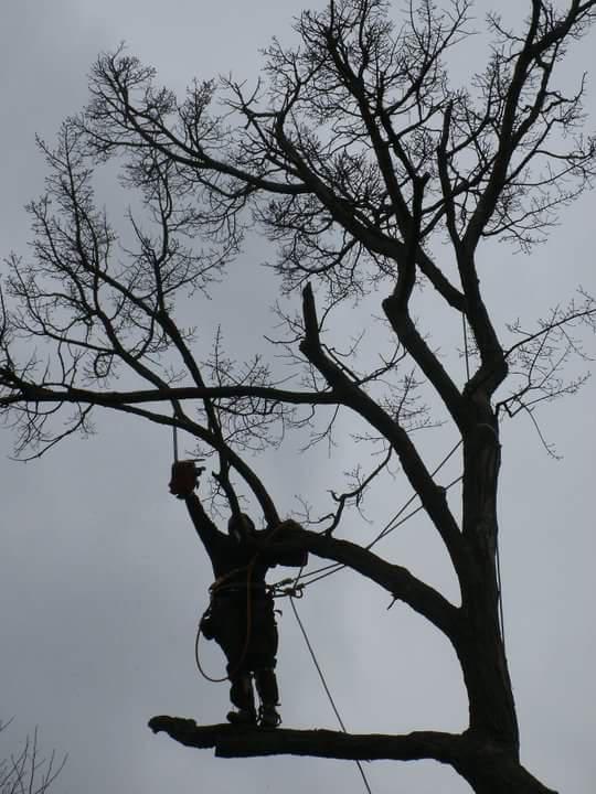 ArborJacks Tree Service image 0